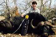 Sportsman's Scrapbook : Cape Buffalo