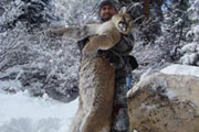 Sportsman's Scrapbook : Cougar